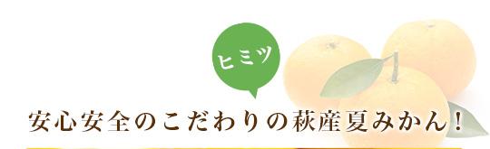 安心安全のこだわりの萩産夏みかん!