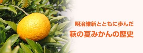 萩の夏みかんの歴史